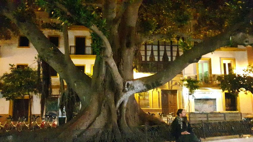 Looking For Adventures Love Spain Postcard View SPAIN TreePorn Tree Tree Of Life Tree_collection  Tree Of Knowledge Traveling Sevilla Seville Tree In The City Human Nature Learn & Shoot: After Dark