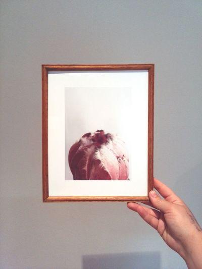 Freshly framed. Fynbos Framed Framedflowers South Africa Protea Nationalflower Nature EyeEm Gallery
