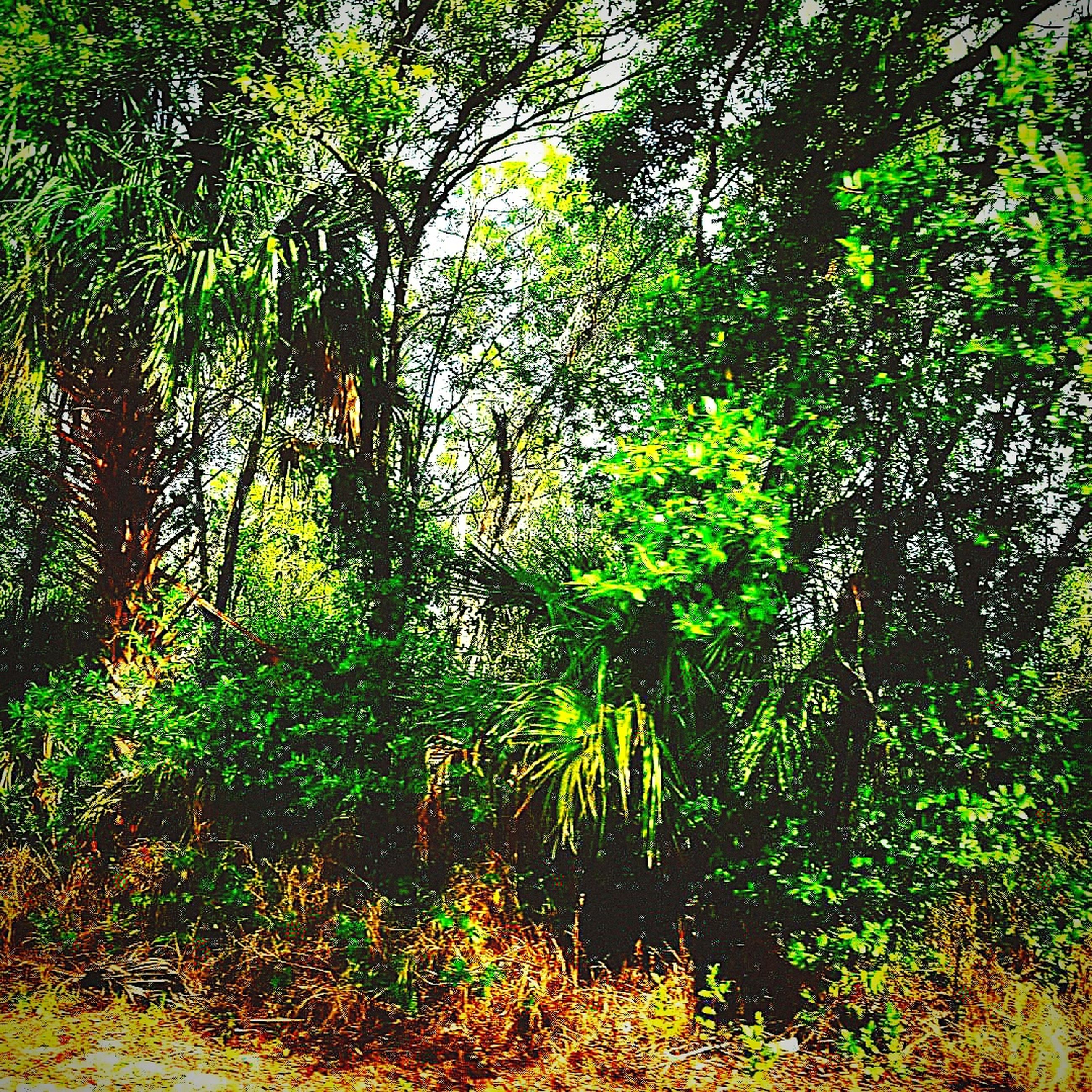 tree, plant, forest, land, growth, beauty in nature, tranquility, green color, nature, tranquil scene, scenics - nature, no people, day, woodland, foliage, outdoors, lush foliage, non-urban scene, idyllic, sunlight, rainforest