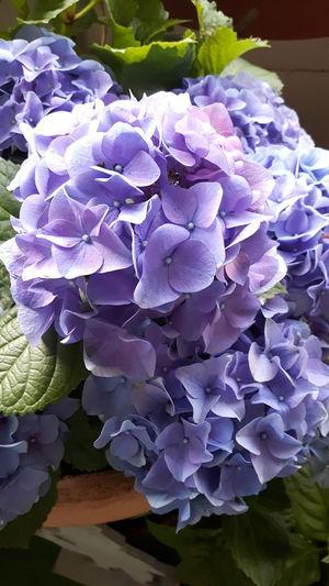 Flower Head Flower Purple Petal Close-up