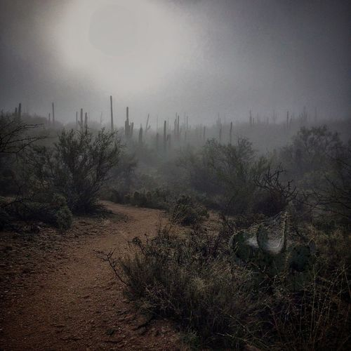 saguaro hills, receding into the foggy distance...rare in the southern Arizona desert... Just Around The Corner Tucson Arizona Landscape_Collection Endlessness Rule Of Thirds EyeEm Nature Lover Looking Into The Future The Great Outdoors - 2015 EyeEm Awards Deserts Around The World IPSWeather