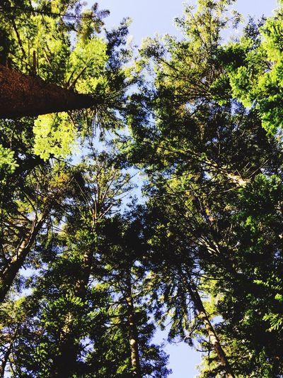 Nature Nature Trees
