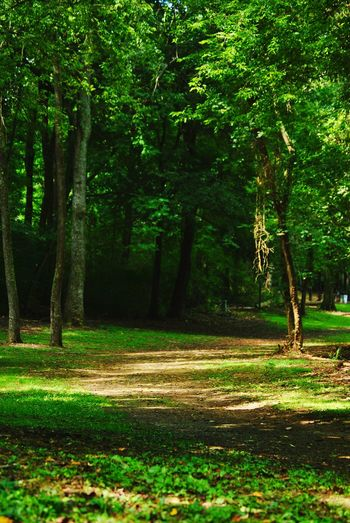 always nice to get out and just walk, quite relaxing. A Walk In The Park A Walk In The Woods Wooded Path Summertime