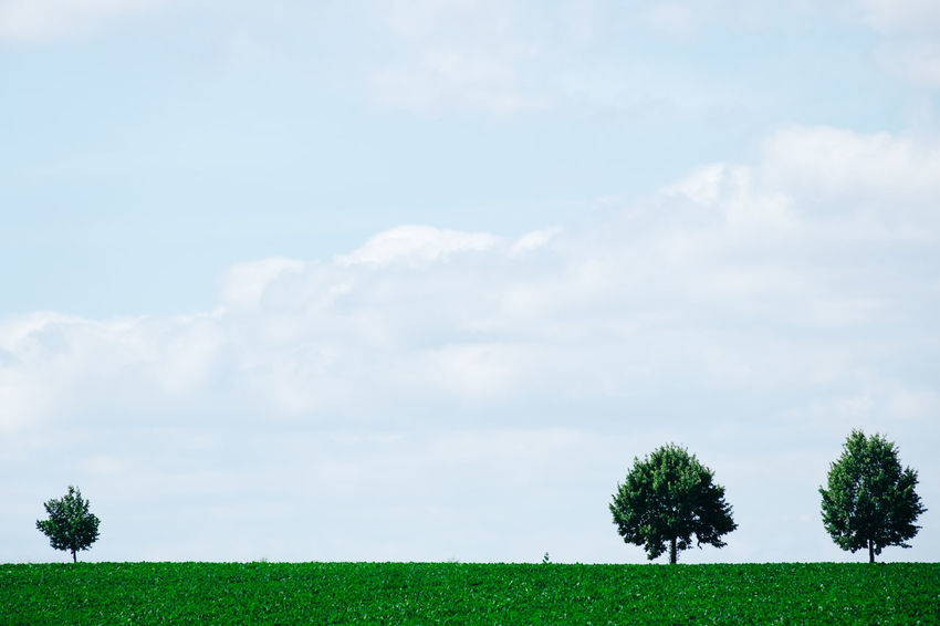 Tree Beauty In Nature Cloud - Sky Clouds Day Environment Field Grass Green Color Growth Idyllic Land Landscape Minimal Minimalism Nature No People Non-urban Scene Outdoors Plant Scenics - Nature Sky Tranquil Scene Tranquility Tree