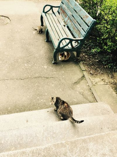 High Angle View Of Cats In Park