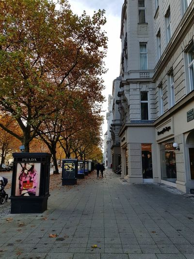City Citylights Autumn Architecture Sidewalk Walking Walking Around Shopping Time Shopping ♡ Tree City Sky Architecture Building Exterior Built Structure