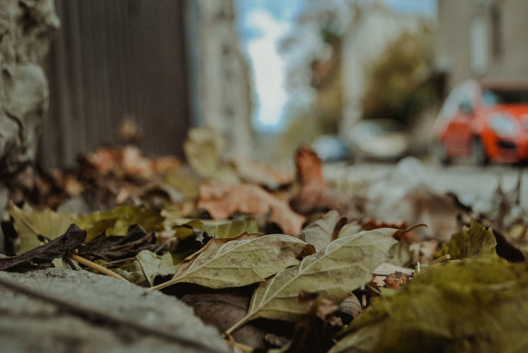 Day No People Nature Outdoors Bosnia And Herzegovina Sarajevo Streetphotography Street Street Photography Autumn Autumn colors autumn mood Canonphotography Canon Leaf Plant Part Selective Focus Dry Leaves Close-up Falling Change Beauty In Nature Plant Surface Level Vulnerability  Land Focus On Foreground Green Color Dried