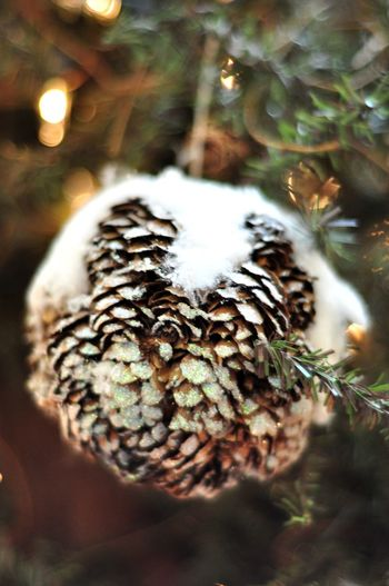Some closed-up picture of Christmas and New Year decoration. Some ice cooling feel Celebration Christmas Christmas Lights Fairy New Year Snow ❄ Advertisement Chirstmas Tree Christmas Decoration Christmas Ornament Close Up Close-up Decoration Detail Details Snow Snow Covered