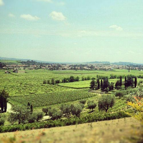 Valpolicella Wine Italy Landscape paesaggio vino campi green