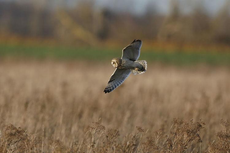 Bird flying over land