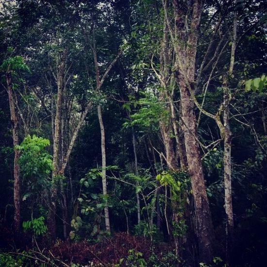 ไปหาแรงบันไดจานก่อนนะ ถ้ายังไม่กลับคือยังหาไม่เจอ Inspiration Nature Finding Adayinthailand Thaistagram Instathailand Instphoto Trees Forest Seeyoutomorrow Nokia  Lumia1020