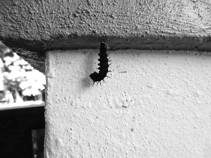 becoming...(1) What I Value: transformation Nature On Your Doorstep Check This Out Wildlife Hanging Out Monochrome Blackandwhite Black And White Silhouette Shades Of Grey