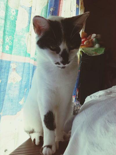 no me toque, no me miren, soy demaciado bello Cat Migato pancho Parezcounavaca Amoamigato
