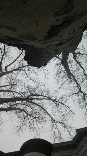 Naked Trees next is Spring whohooooo Sky_ Collection Perspectives On Nature