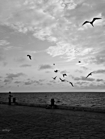 Goodplace Sea And Sky B&w Memories