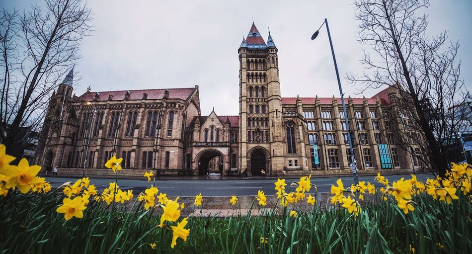 Daffodils growing at roadside against historic building
