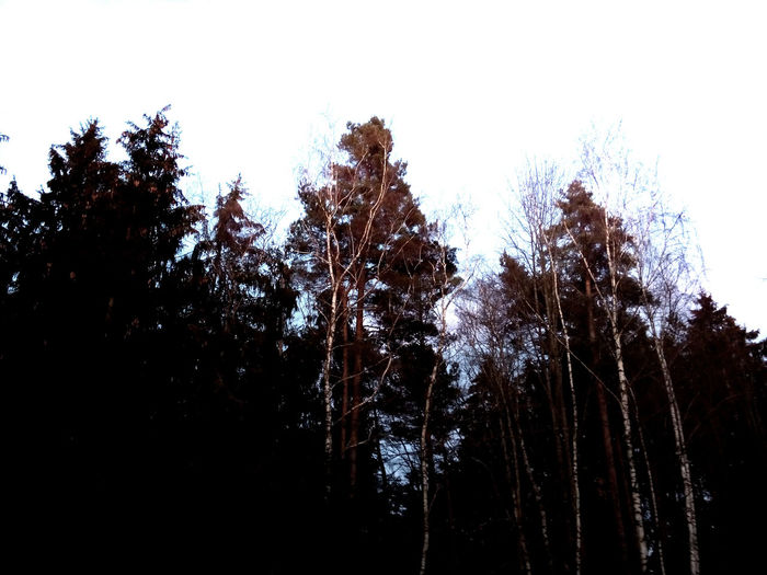 bavarian forrest Bare Tree Bavarian Forrest Birke Cold Temperature Forest Forrest Forrest Photography Mystery Tree Winter