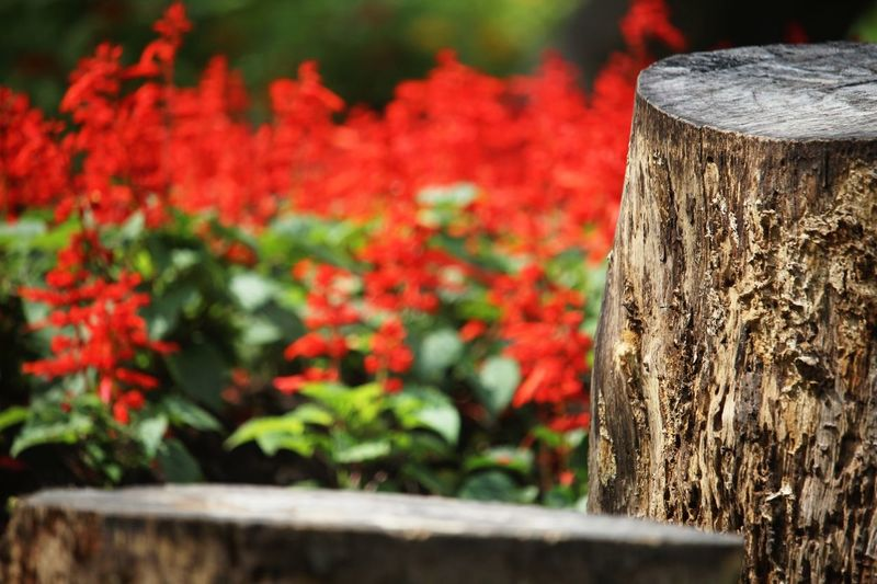 Close-up of wooden tree trunk