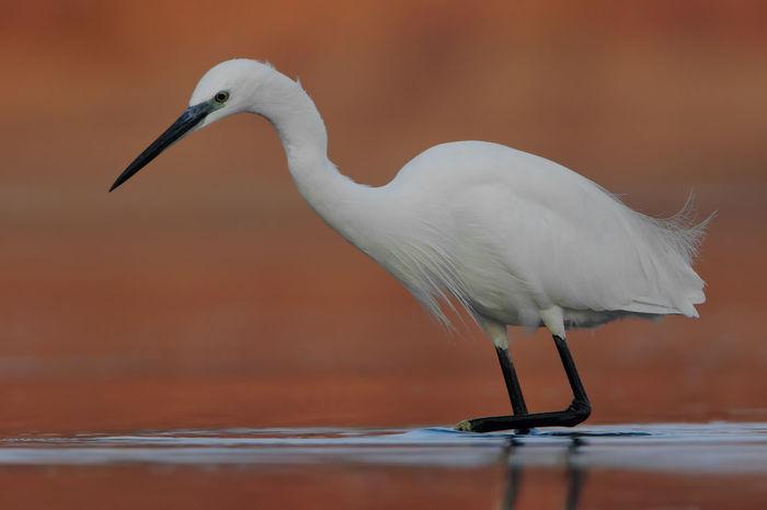 Garzetta Bird Animal Themes Animals In The Wild Wildlife Wild Wild Bird Bird Photography Birds_collection Birdwatching Swamp