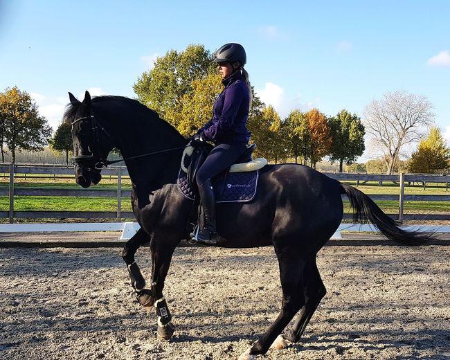 Dancing PracticeMakesPerfect Dark Stallion Women Horseback Riding Riding Agriculture Horse Sky
