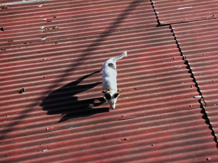 Adapted To The City dog and the roof. Animal Themes Sunlight Animals In The Wild Pets Outdoors The City Light