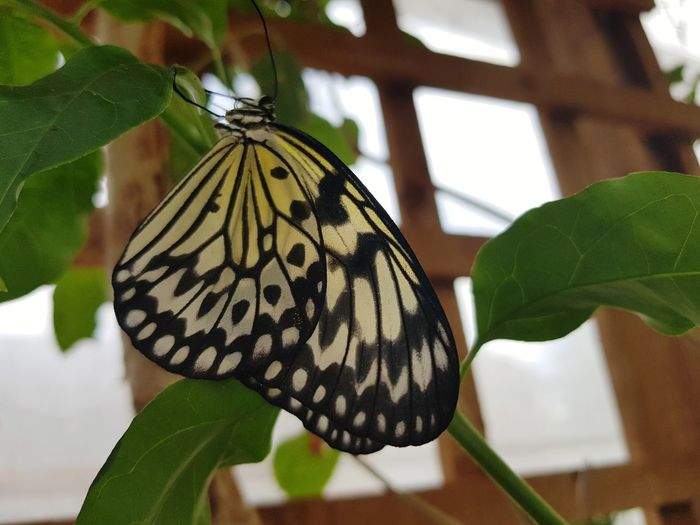 butterfly Perching Spread Wings Leaf Butterfly - Insect Flower Insect Full Length Animal Markings Animal Wing Close-up Butterfly