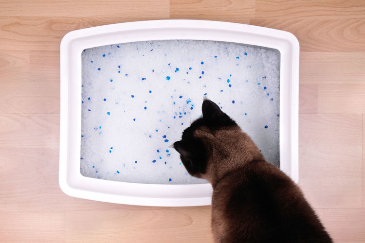 cat examines litter box with compostable silicate litter Hygiene Litter Box Animal Themes Cat Cat Litter Cat Litter Box Cat Pan Cat Toilet Cats Close-up Compostable Directly Above Domestic Animals Eco-friendly High Angle View Indoors  Kitty Litter No People Pet Pets Silicate Litter
