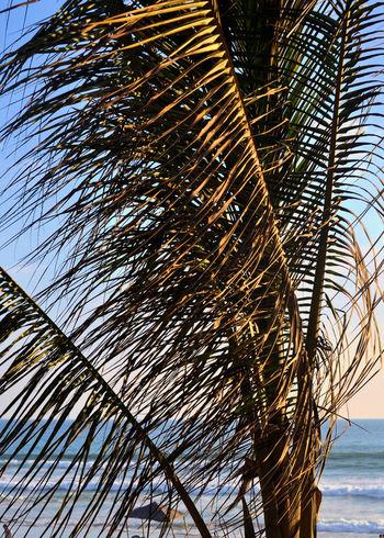 beautiful evening in Acapulco Acapulco Playa Diamante Acapulco Sunset Beach Sunset Horizon Twilight Twilight Beach Beauty In Nature Evening Beach Evening Palm Trees And Sea Nature Palm Tree Sunlight Sunset Palm Tree Tranquility Tropical Climate Tropical Sunset Tropical Tree