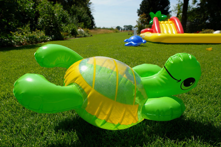 Summer Views Childhood Dolphin Float Grass Green Color Inflatables Multi Colored Nature Outdoors Park - Man Made Space Plastic Pool Summer Sunny Sunny Day Toys Turtle