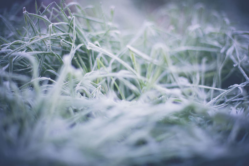 Backyard Cold Cold Weather Frost Frosty Grass Frosty Grass Blades Frosty Morning Frosty Mornings Grass Nature Nature Photography Nature_collection Best Of EyeEm Best Of Eyeem Shot Best EyeEm Nature Best EyeEm Shot Best Eyeem Pics Best Eyeem Shots