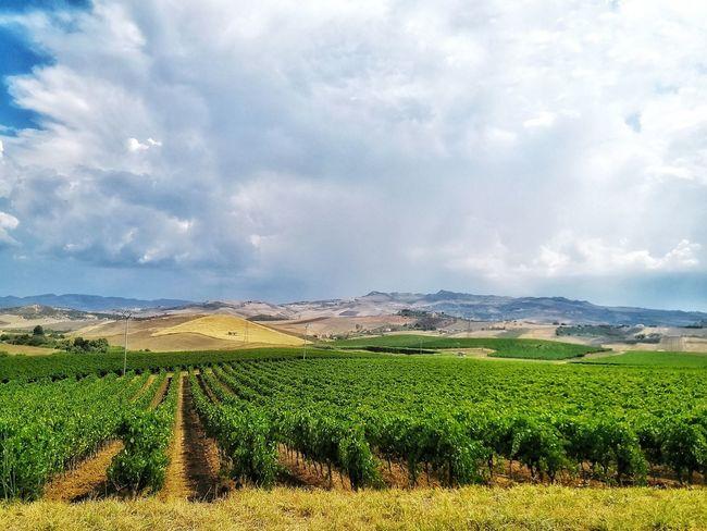 Vine - Plant Irrigation Equipment Rural Scene Agriculture Cultivated Field Fruit Vegetable Tea Crop Horticulture