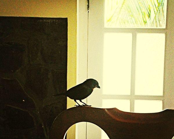 Breakfast companion Taking Photos Bird Relaxing Enjoying Life