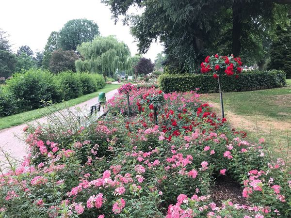 Rosarium Uetersen, Germany... Beauty Is Everywhere  Summer Flowers Flowers Of EyeEm Roses World 🌹❤️🌹 Roses🌹 The Great Outdoors - 2018 EyeEm Awards Eye4photography  Rosarium Plant Flower Flowering Plant Growth Beauty In Nature Tree Nature Freshness Vulnerability  Fragility Day Park No People Park - Man Made Space Green Color Field Outdoors Flowerbed Sky Red