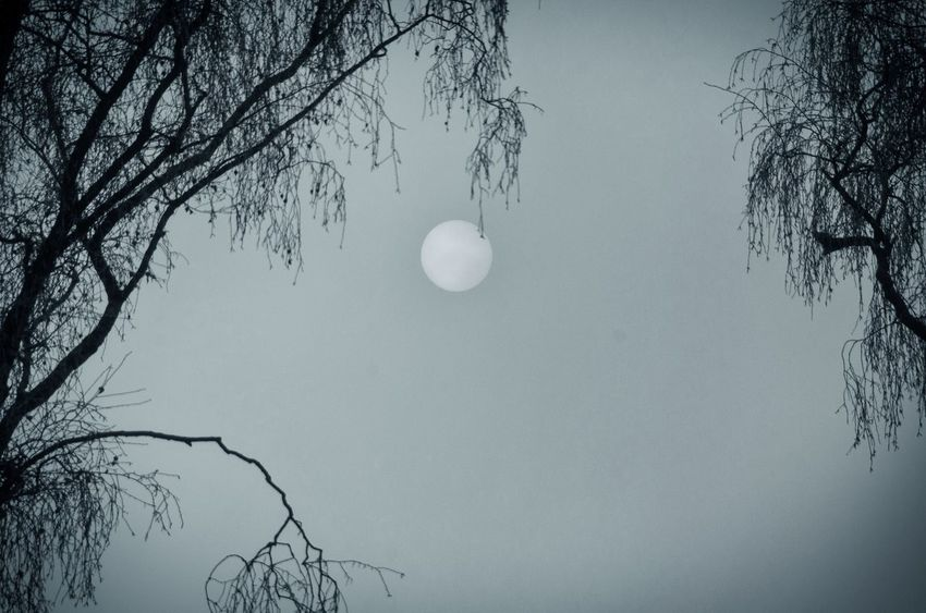 Magic Getting Inspired Silhouette Winter Bare Tree Beauty In Nature Black And White Blackandwhite Cold Fog Foggy Monochrome Nature Outdoors Space Sun Tranquility Tree
