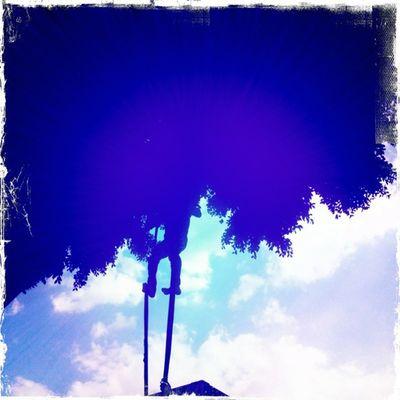 Le jalan las patas a las ramas. #Hipstamatic #RobotoGlitter #KodotXGrizzled #BerryPop Hipstamatic Robotoglitter Kodotxgrizzled Berrypop