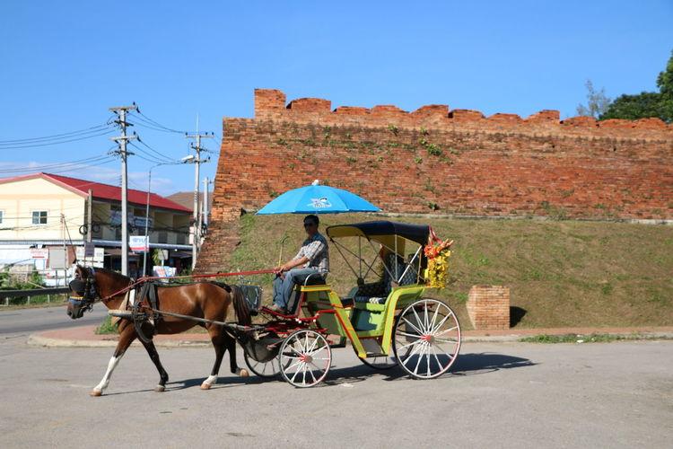 Carriage Horse Landau Lampang Old Walls Road