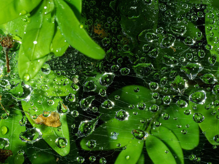 Close-up of raindrops on spider web and leaves
