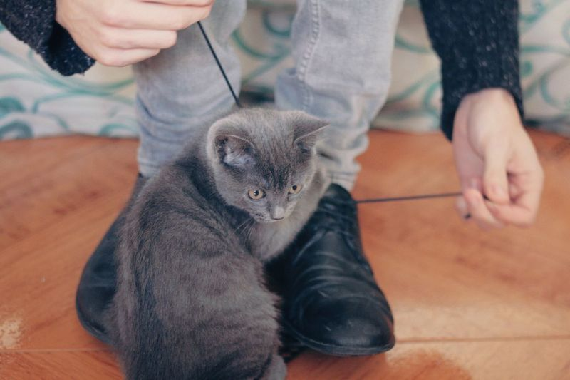 Domestic Cat Feline Pets Domestic Animals Cats Cat Cats Of EyeEm EyeEm Best Shots Cat♡ Shoes Cat Lovers RePicture Growth Pet Portraits