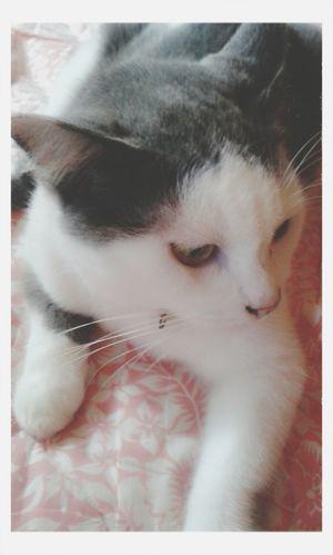 Cat♡ Pet Love