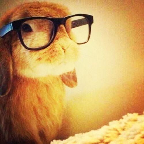 努力学习的兔子!study hard! Studying