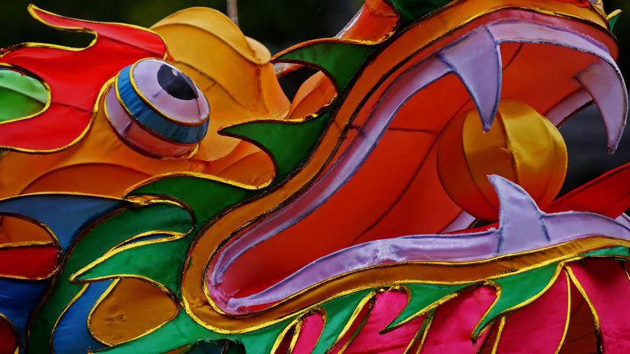 Close-up of multi colored dragon