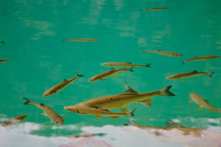 Plitvice Lakes National Park Animal Behavior Animal Themes Animals In The Wild Beauty In Nature Colors and patterns EyeEm Nature Lover Fish Fishing Lake Lake View Lakeshore Nature Nature_collection Plitvice National Park Swimming Togetherness UnderSea Water Water_collection Water Reflections Water Surface Water_collection Waterscape Wildlife Light And Reflection