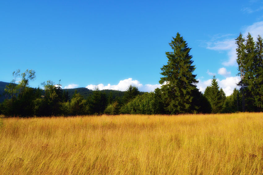 BeautifulnatureEyeEmLandscapeNewtothisBeauty In Nature Field Nature EyeEmNewHere Outdoors EyeEmNewHere