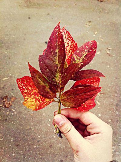 Autumn Full