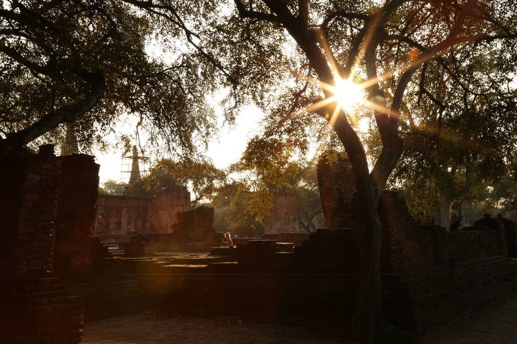 Architecture Ayutthaya Branch City Outdoors Silhouette Sun Sunbeam Sunlight Sunny Sunset Thailand Tree
