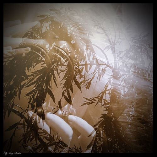 Beauty In Nature Taking Photos EyeEm Gallery Lilymayparker.blogspot.be Lily May Parker Eyem Nature Lover Behind The Lens Belgium From My Point Of View Earn My Memory  Sadness And Sorrow Own Style  Lily May Art Lily @rt Lily Style Behind The Scene Woman Of EyeEm Grieving The Painter