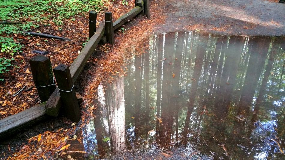 Wooden wet fence frames rain water puddle reflected Redwood trees. Wooden Wet Rain Rainwater Reflection Redwood Trees Rust Autumn Fall Season  Water Upside Down High Angle View Above Perspective Angle Fence Wire Asphalt Zen Countryside Forest Rural Misty Illusion Water Leaves