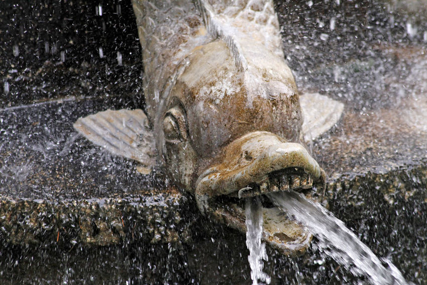 Triton Water Animal Splashing Animal Body Part Animal Wildlife Flowing Water Animal Head  Sea Underwater Fountain Motion Animal Themes Spraying Outdoors Triton Tritone Triton Fountain Palace Garden Jet Ugly Face Monster