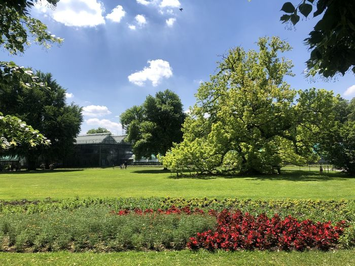 Scenic view of flowering plants and trees in garden