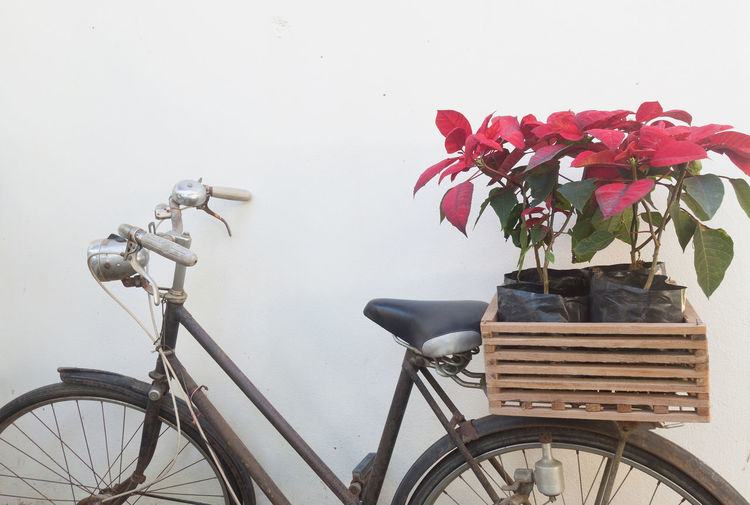 Close-up of red flowering plant in basket against wall
